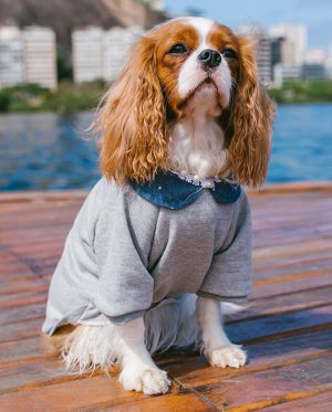 Roupa Moletom para cachorros Conforto Cinza – Pérolas