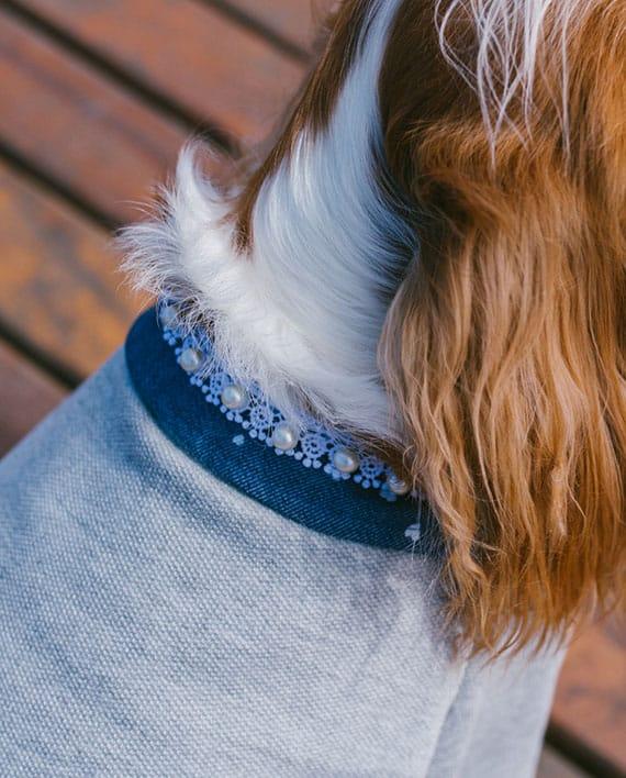 Moletom para cachorro cinza com gola azul