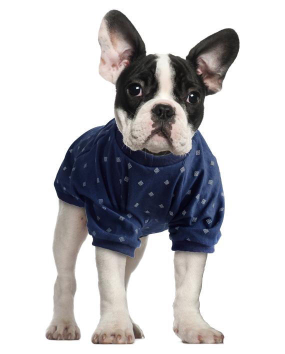 roupa para cachorro camiseta de malha