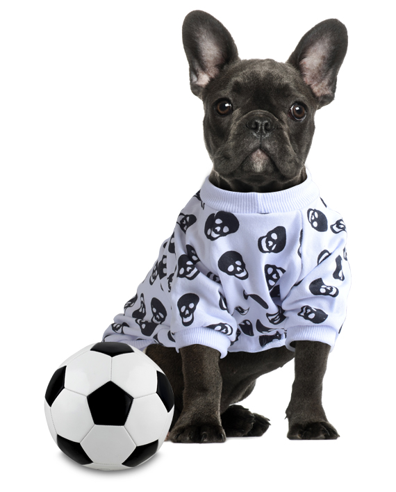 roupa para cachorro moletom branco
