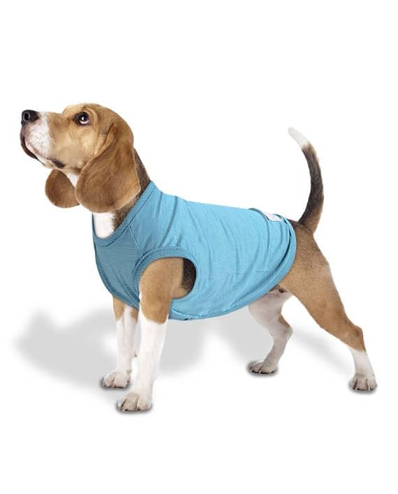 Roupa para cachorros Regata Dry Fit Aquamarine