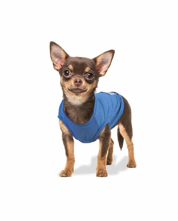 Roupa para cachorros Regata Dry Fit Azul