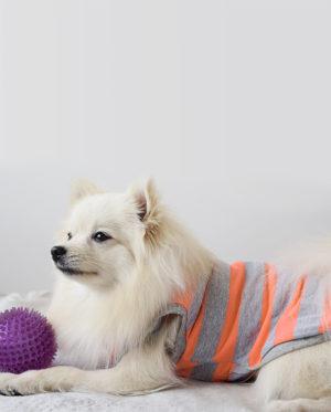 Roupa para cachorros Regata Listras – Laranja