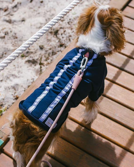 Moletom para cachorro azul com fita branca