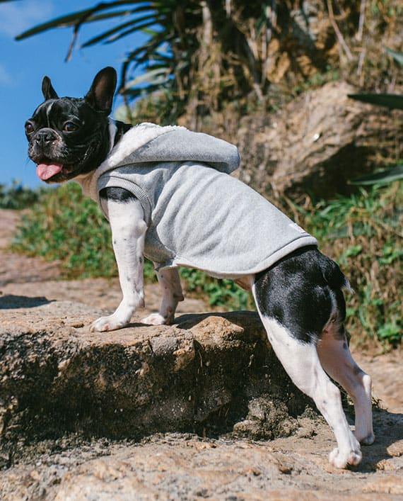 Moletom para cachorro com capuz na cor cinza